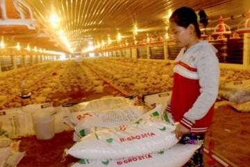 """Thức ăn chăn nuôi đồng loạt tăng giá, nông dân """"điêu đứng"""""""